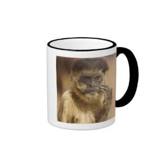 Piaui, Brazil, Brown Capuchin, Cebus apella, Mugs
