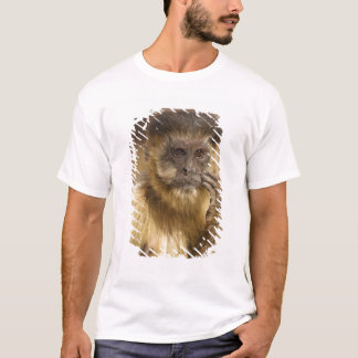 Piaui, Brazil, Brown Capuchin, Cebus apella, T-Shirt