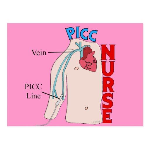 PICC Line Nurse Anatomical  Design Gifts Postcard