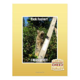 Pick Faster! Postcard
