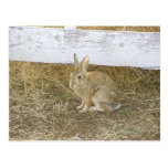 Picket Fence Bunny Post Cards