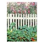 Picket Fence With Sweet Peas And Nasturtium Postcard