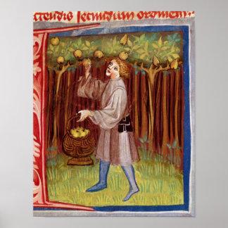 Picking fruit poster