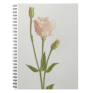 Picture for decorating notebooks