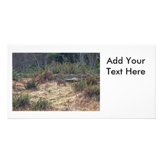 Picture of Bobcat Photo Greeting Card