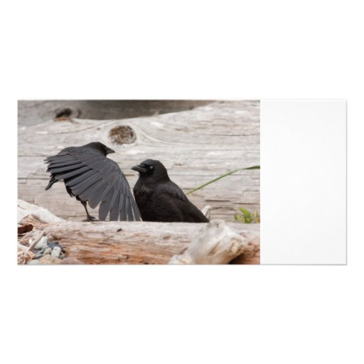 Picture of Crows Photo Card Template