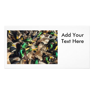 Picture of Ducks in a Crowd Photo Greeting Card