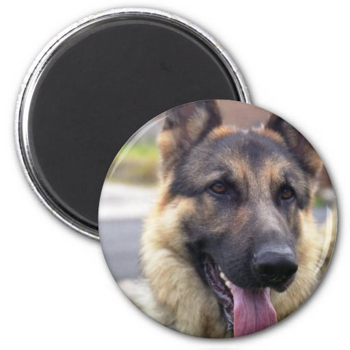 Picture of German Shepherd  Magnet Refrigerator Magnet