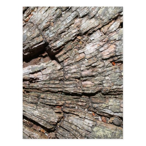 Picture of Old Tree Stump Wood Post Card