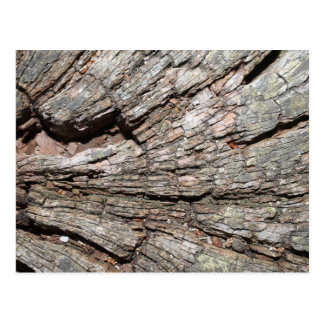 Picture of Old Tree Stump Wood Postcard