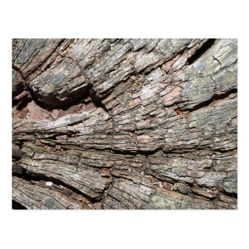 Picture of Old Tree Stump Wood Post Cards