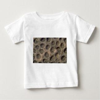Picture of Sea shells, Trinidad Tee Shirts
