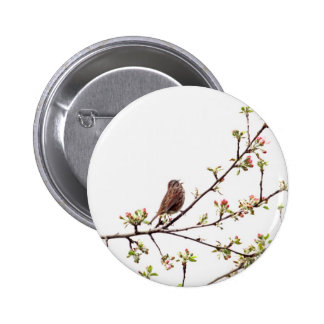 Picture of Sparrow Singing in Flowering Tree 6 Cm Round Badge