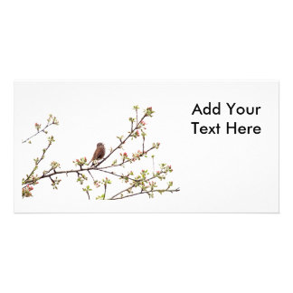 Picture of Sparrow Singing in Flowering Tree Photo Cards