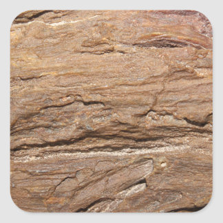 Picture of Wood Fossil Sticker