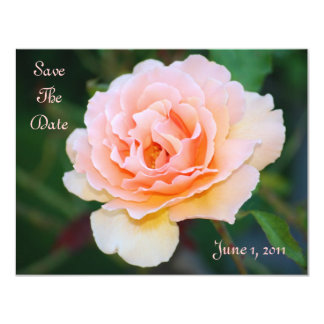 Picture Perfect Rose Save The Date Card