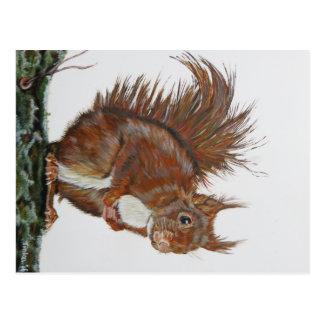 Picture postcard squirrel