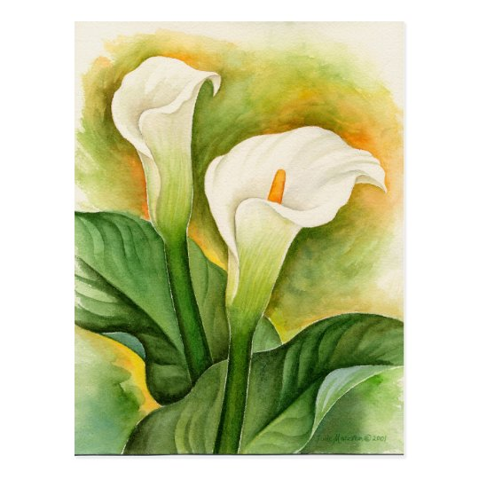 Pictures Or Images Of Calla Lily Flowers Painting Postcard