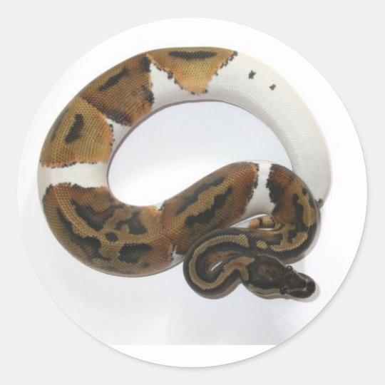 piebald ball python classic round sticker