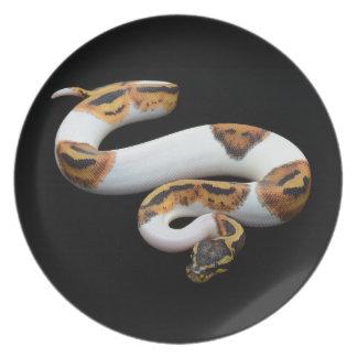 piebald ball python plate