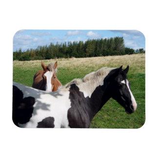Piebald & Chestnut Horses Photograph Rectangular Photo Magnet