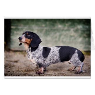 Piebald dachshund card