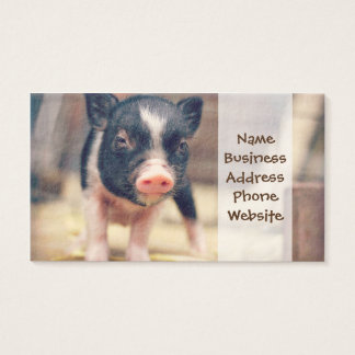Piebald Pig puppy for Pig Lovers