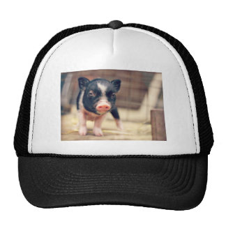 Piebald Pig puppy for Pig Lovers Cap