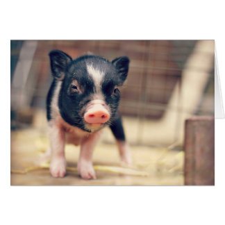 Piebald Pig puppy for Pig Lovers Card