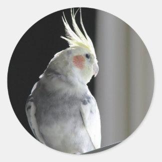 Pied Cockatiel Round Sticker
