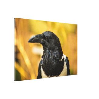 "Pied Crow Large (60.00"" x 39.00""), 1.5"", Single Canvas Print"