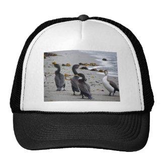 Pied Shags Mesh Hat