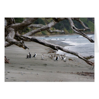 Pied Shags on the Beach Greeting Card