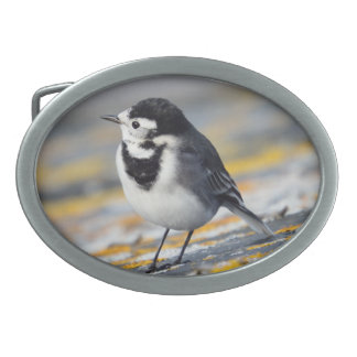 Pied Wagtail Belt Buckle