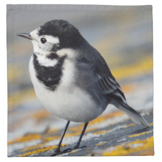 Pied Wagtail Cloth Napkins