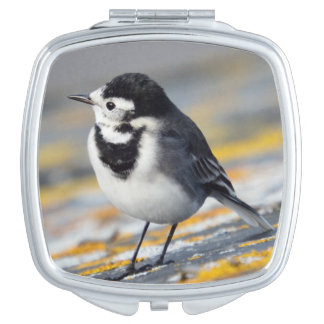 Pied Wagtail Compact Mirror