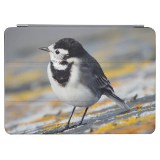 Pied Wagtail iPad Cover
