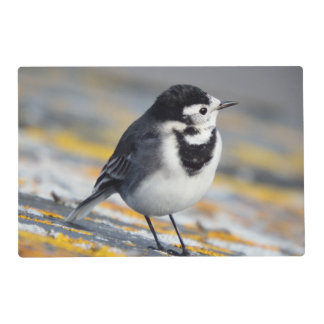 Pied Wagtail Laminated Placemat by Deb Vincent