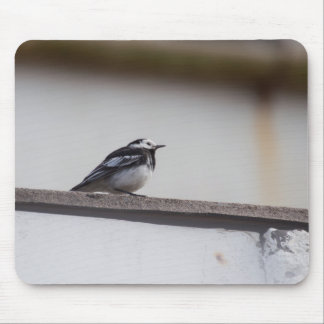 Pied Wagtail Mouse Mat