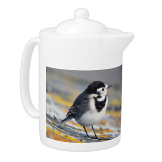 Pied Wagtail Teapot