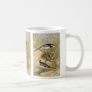 Pied Wagtail Vintage Bird Illustration Basic White Mug