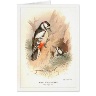 Pied Woodpecker Card