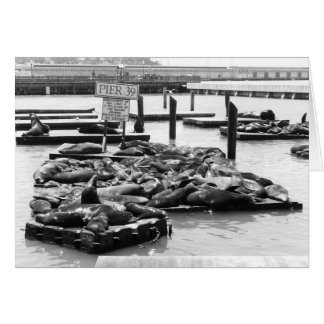 Pier 39 Sea Lions notecards Greeting Card
