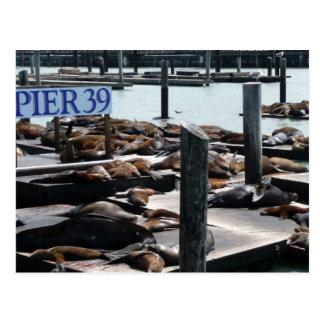 Pier 39 Sea Lions Postcard