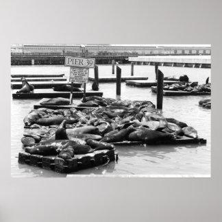 Pier 39 Sea Lions poster