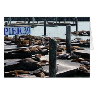 Pier 39 Sea Lions San Francisco Photography Greeting Card