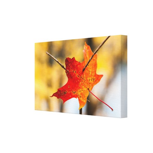 pierced in autumn stretched canvas prints