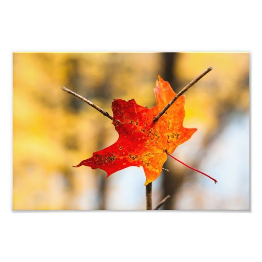 pierced in autumn photographic print