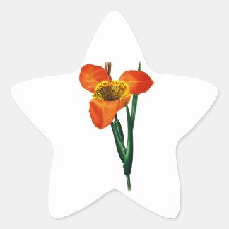 Pierre-Joseph Redouté — Tigridie queue de Paon Star Sticker