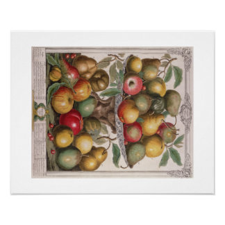 Pieter Casteels, Twelve Months of Fruits  February Poster